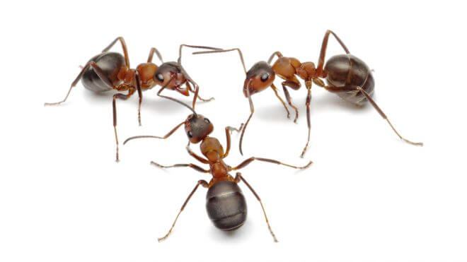 How Do I Get Rid of Ants in My Property?