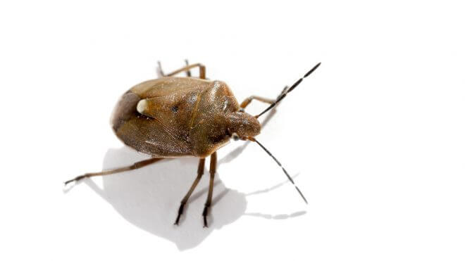 How Do I Get Rid of Bed Bugs?