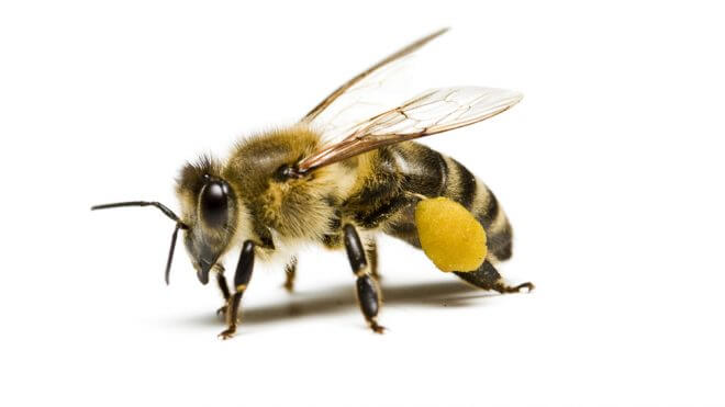 How to Get Rid of Problematic Bees